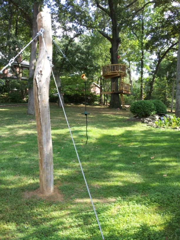 over a hundred feet to a cabled back black-locust stump